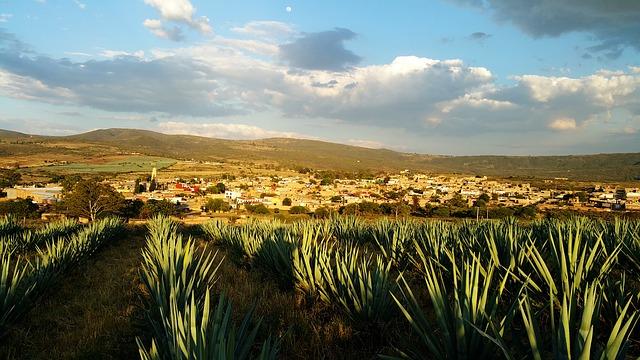 Unterschied von Mezcal und Tequila - Agavearten
